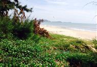 Lô đất gần 1400m2 Mũi Né - Phan Thiết, có MT đường và bãi biển phía sau