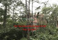 Biệt thự villa 1000m2 cần bán tại Măng Đen